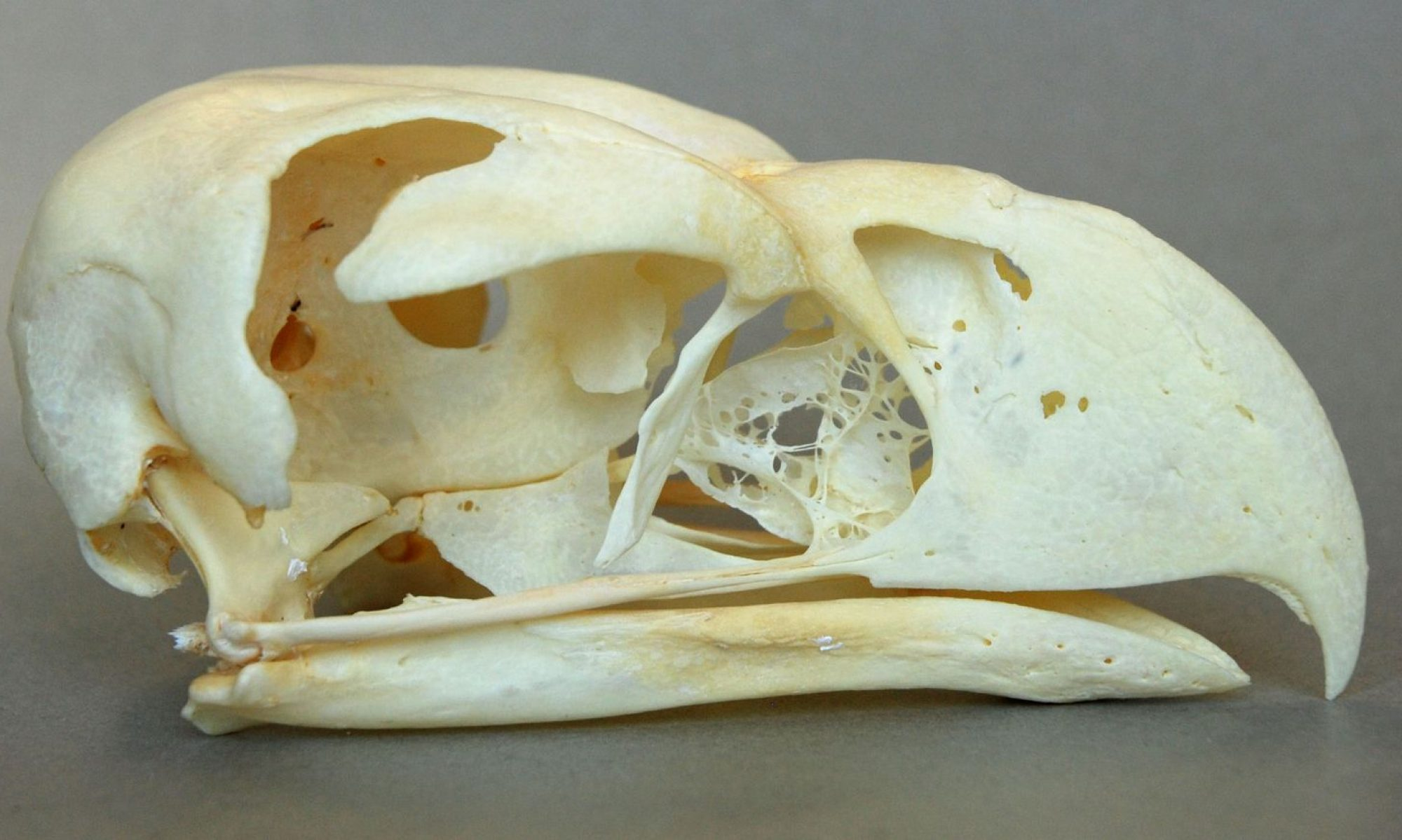 skullsite